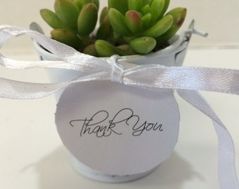 "Gorgeous Succulent 50 Plant Assortment in 2"" pots with White Pails, White Ribbons and Tags."