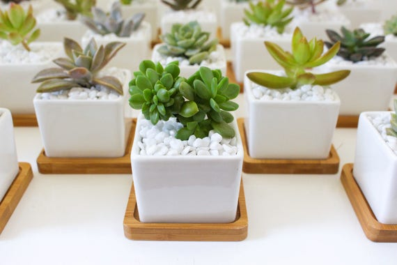 Medium Square Ceramic Pot Wedding Favour