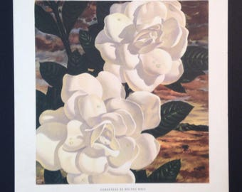 Vintage lithogravure still life Gardenias by Haines Hall