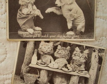 Vintage Cat Postcards, cat photos, animal postcards, 30's greeting cards, humorous cards, funny cards