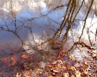Reflections in a pool off the Pawtuxet River, RI