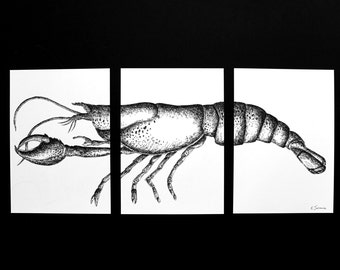 Lobster ink art, drawing, A3 and A4 prints,  animal in black and white, ink drawing in black and white, lobster ilustration