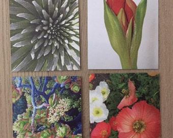 Joyful Nature set of four cards