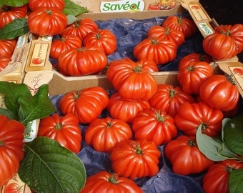 Marmande Heirloom Tomato (200 SEEDS)