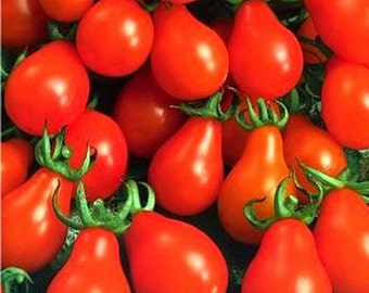 Red Pear Tomato - Cherry Bell (150 SEEDS)