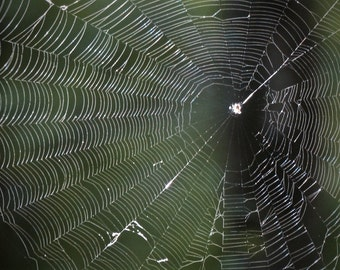 Nature Photography, Spider Web Photo, Macro Photo, Suitable for Framing, Wall Art, Natural Decor, Dark green, Nature abstract, Home decor