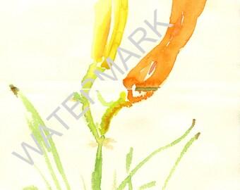 lilies no.3