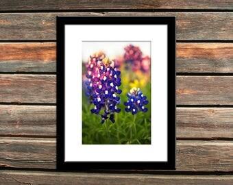"Texas Home Decor Print   ""Bluebonnet Sunset Detail""   Texas Wildflowers Photo Print - Texas Bluebonnets Wall Art  12x16 Photo - 11x14 Photo"