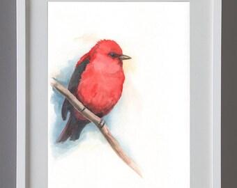 Piranga rubra, original watercolor birds, 18cm x 26cm