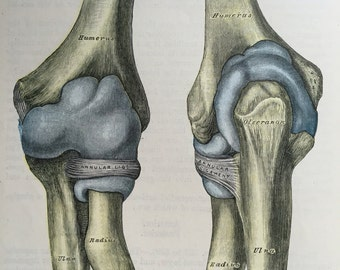 Pack of TWO 1940s Vintage Medical Bones and Joints Lithograph Illustrations. From 1942 Gray's Anatomy