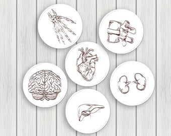 Human Anatomy flair Pinback Button Pin Badges Coaster teacher gifts brain skull science anatomical heart geekery stocking stuffer party goth
