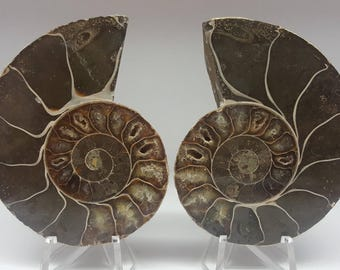 XL Ammonite Pair, WHOLE Ammonite cut in half, comes with stands
