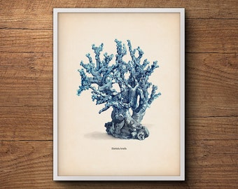 Blue coral print, Coastal wall print, Coastal beach print, Framed art prints, Coastal decor print, Coral prints, Coastal art, Coastal decor