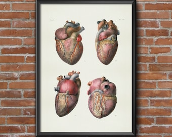 Old vintage Illustrations of Anatomy-medical Anatomy-heart Prints