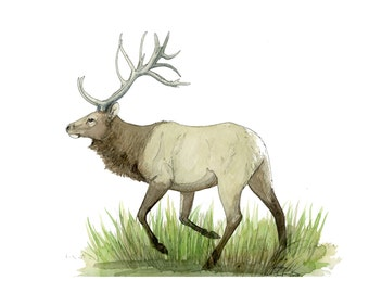 deer art, elk, decoration, collectible, wall art, nature artwork, original painting, watercolor original, decor, house decor, nature decor