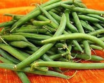 50 TENDERGREEN GREEN BEAN Phaseolus Vulgaris Vegetable Seeds