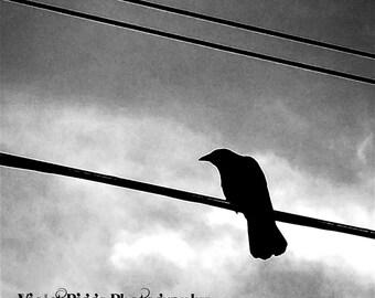 Goth Crow