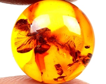 Good Quality 3.50 Cts BALTIC AMBER Loose Gemstone Round Cabochon 13x13 mm