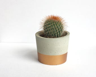 Midi Copper Dip Concrete Pot with Cactus
