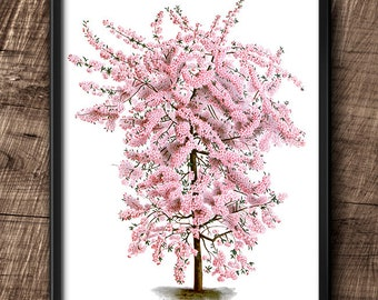 Japanese flowering crabapple · Instant Download · Tree · Vintage · Wall · Printable · Digital File #83