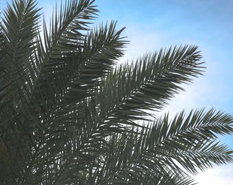 Feathered Palm Tree Branches Photo