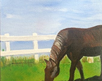 Shelby in Pasture
