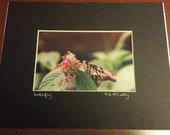 650 8x10 Matted Butterfly Signed Photography Photograph Print