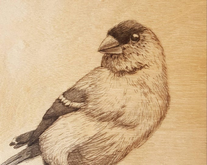 Goldfinch - Original drawing by Mr Hooper of Nashville Tennessee