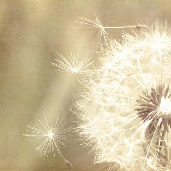 Dandelion photo, muted tones, pastel tones, rustic decor, wildflower, sepia hue, still life, natural, organic, meditation, summer, nature