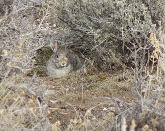 Bunny in Sage