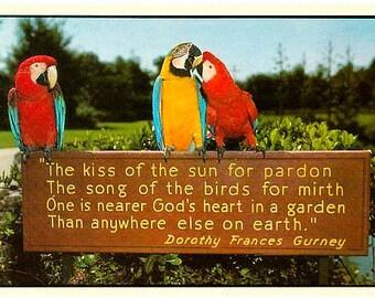 Vintage Florida Postcard - Macaws at Busch Gardens, Tampa (Unused)