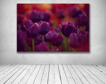 Purple Tulips, Purple Tulips Photography, Tulip Canvas Art, Purple Flower Canvas Art, Purple flowers Photography, Tulip Photography
