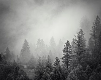 Forest Photograph in Black and White, Mountain Pines