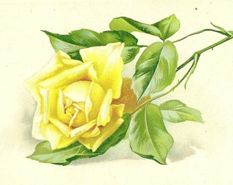 Single Yellow Rose on Antique Birthday Postcard Pre-Printed Birthday Greetings from Tuck and Sons 1913 Artistic Birthday Postcards Series