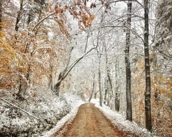 Rural Road through the Seasons Print