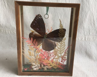 Vintage butterfly  taxidermy butterfly   Butterfly specimen  naturalist