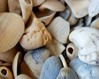 Mixed Assorted Smooth shell shards & whole holey shell chips broken smooth pieces Coastal Home Decor Displays Jar Filler Terrariums