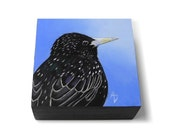 Starling painting, realistic wildlife art - European Starling artwork - black bird painting - original painting on square art block