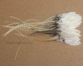 Unique Feathers White Beige Natural Craft Feathers 2DOZEN Real Rooster Feathers