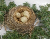 Natural bird nest with eggs Small Natural Birds Nest Abandon Nest Nature Study Natural Crafts Vintage Decor Curiosity Cabinet fathers day