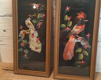 Feather bird art. A Lambert bird pictures.