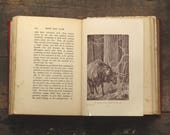 Antique book of Animal stories Hoof and Claw by Charles G. D. Roberts illustrated by Paul Bransom