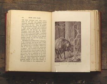 Antique book of Animal stories, Hoof and Claw by Charles G. D. Roberts, illustrated by Paul Bransom
