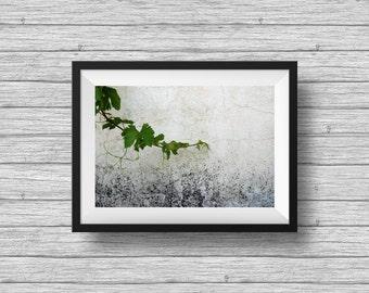 Botanical art print, minimalist wall art, vine branch, textured wall, rustic wall decor, living room decor, horizontal print, autumn photo