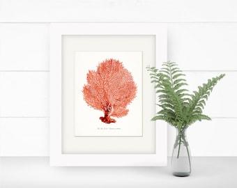 Coastal Decor Sea Fan Sea Coral Natural History Giclee Art Print 8x10 Coral