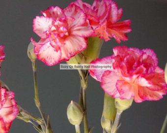 Carnations, Beautiful Pink Carnation ART, Instant Download, Photography, Pink Carnations, WALL ART, Canvas Art, Business Wall Art, Zen Art
