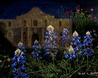 Alamo in Bluebonnets at Night