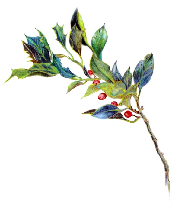 Exquisite Holly Branch with Berries, Artful 3D Rendered Art Print, Holly Ilex, Christmas Green, Yule Green, Evergreen Art Print
