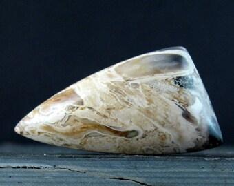 Fabulous Rare Palm wood cabochon, Petrified wood  cabochon, Natural stone, Jewelry making supplies S7748