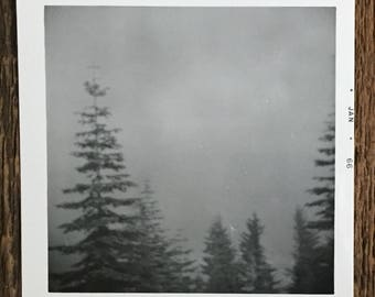 Original Vintage Photograph The Misty Morning